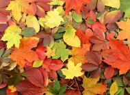 leaves diverse feature